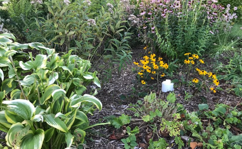 Learn How to Take Care of Rain Gardens Sept 9